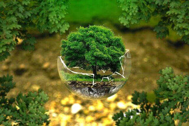 Essay on Environment for students and children
